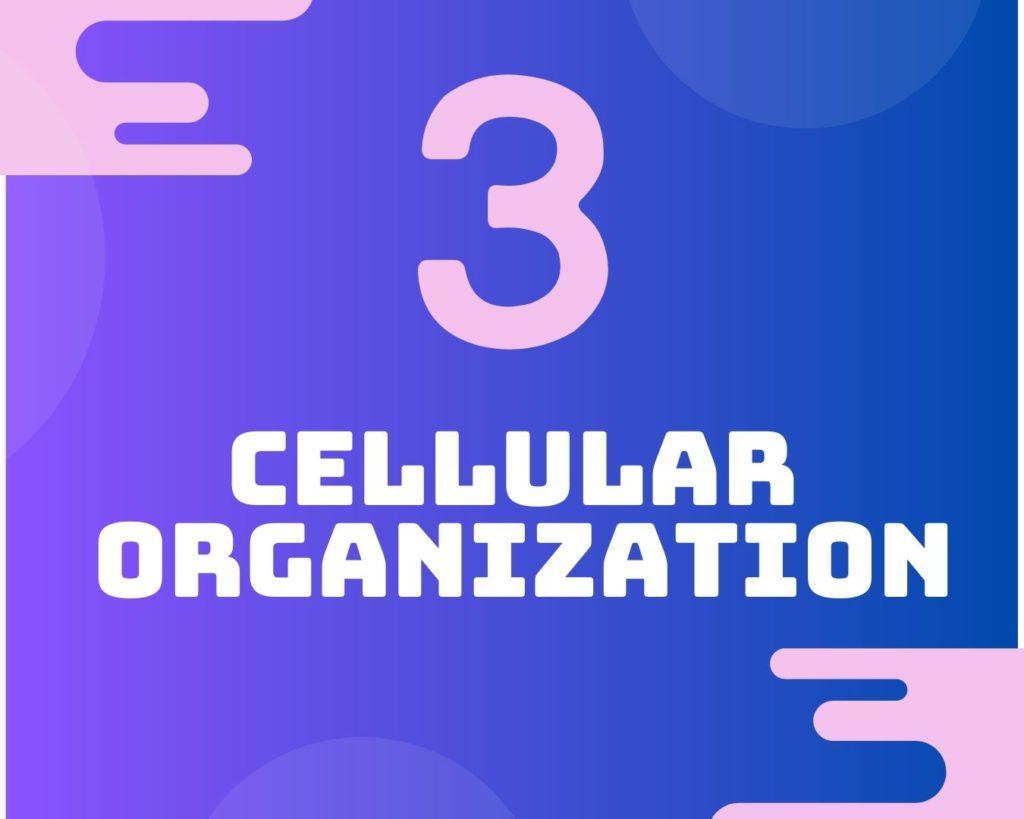 3 Cellular organization